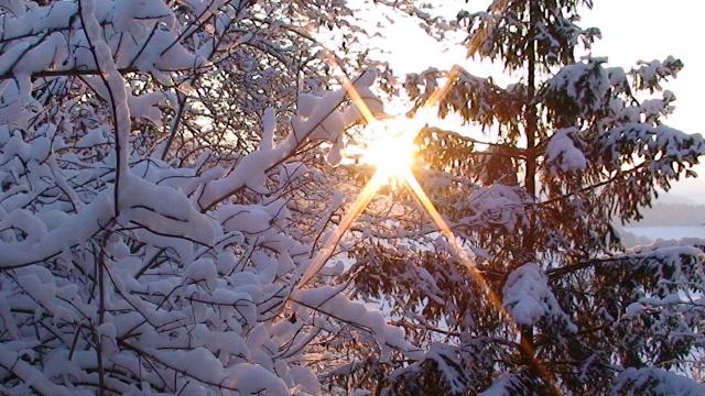 Rohkost im Winter